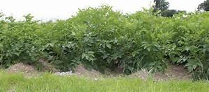 Rendre Une Terre Argileuse Plus Souple : butter la pomme de terre ~ Melissatoandfro.com Idées de Décoration