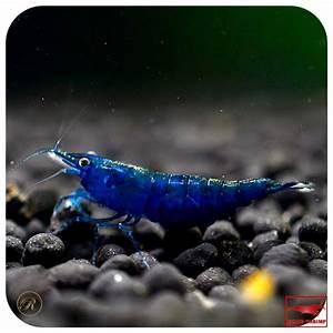 Die Besten Aquarien : die besten 25 kleine aquarien ideen auf pinterest fisch ~ Lizthompson.info Haus und Dekorationen