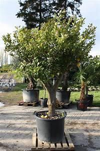 Mediterrane Bäume Winterhart : mediterrane pflanzen ~ Frokenaadalensverden.com Haus und Dekorationen