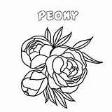 Coloring Peony Flower Flowers Printable Dahlia sketch template