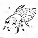 Fly Coloring Vlieg Fluga Clip Hoverfly Mouche Illustrations Ladybug Cartoon Coloriage Livre Kleurend Boek Animal Dessin Illustrationer Sequence Housefly Cycle sketch template