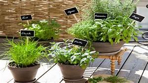 Plante D Extérieur En Pot : d co balcon et am nagement petit balcon en ville ~ Teatrodelosmanantiales.com Idées de Décoration