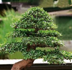 Abtreter Für Draußen : bonsai f r drau en und drinnen ~ Orissabook.com Haus und Dekorationen