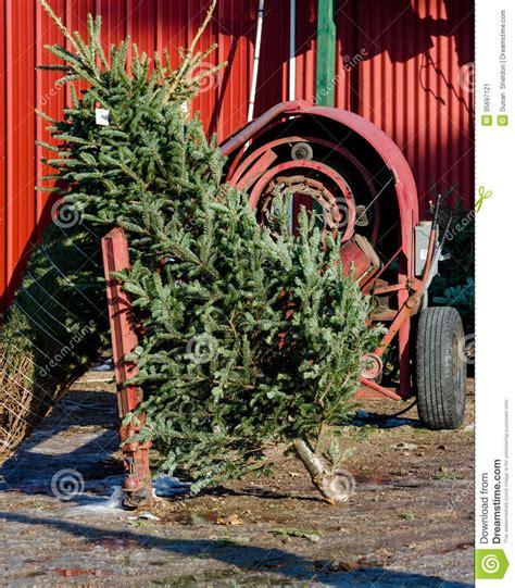 christmas tree and tree wrapping machine stock image