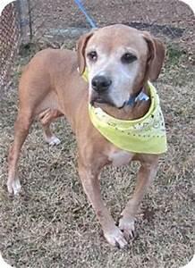 Gator | Adopted Dog | Woodstock, GA | English Bulldog ...