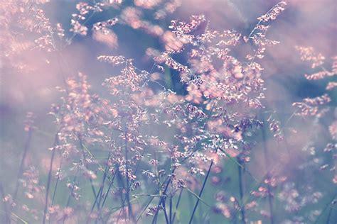 bloemen in afwasmiddel en water fotograferen krabbelplaatjes nl bloemen hyves krabbels