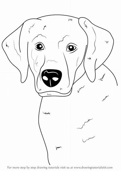 Draw Face Step Labrador Drawing Animals Drawings
