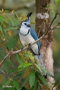 Arenal Volcano Costa Rica Birds