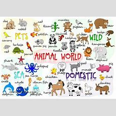 Animal Vocabulary  You Can Learn