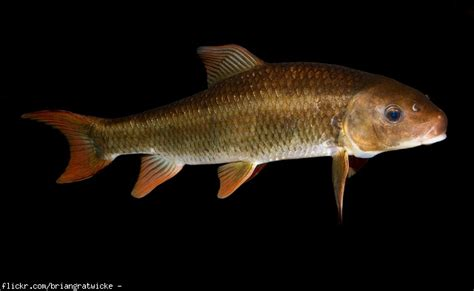 fish smells like ammonia why does fish sometimes taste like ammonia restaurant frozen shrimp food and drink