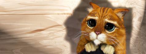 cute cat kitten cover photo  facebook timeline