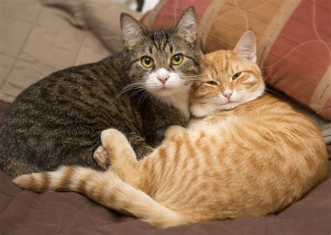 Most Trendy Male And Female Cat Names Of The Year