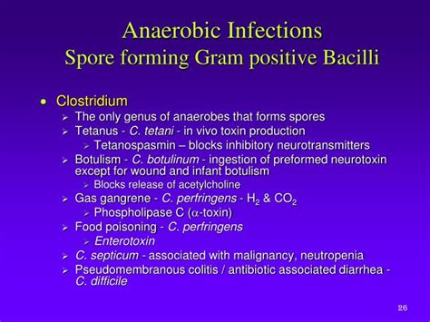 ppt anaerobic bacteria powerpoint presentation id 2122265