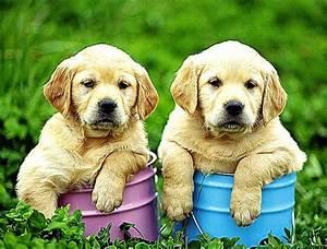 Black N Yellow Labrador Dog Wallpaper Desktop   Photo ...