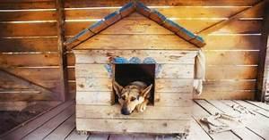 Niche Interieur Pour Chien : niche pour chien bien la choisir pr parer l 39 arriv e du chien wamiz ~ Melissatoandfro.com Idées de Décoration