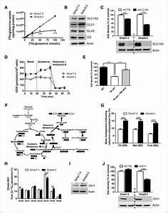 The Sirt1  Hif2 U03b1 Axis Drives Reductive Glutamine Metabolism
