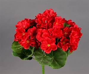 Orchideen Ohne Topf : geranie 26cm rot ohne topf zf modell 2018 kunstpflanzen kunstblumen k nstliche blumen ~ Eleganceandgraceweddings.com Haus und Dekorationen