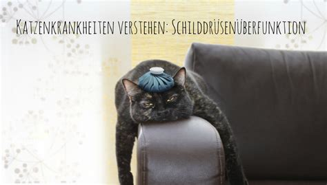 schilddruesenueberfunktion bei katzen revvetde