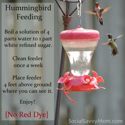 hummingbird food recipe boil 4parts water and 1part