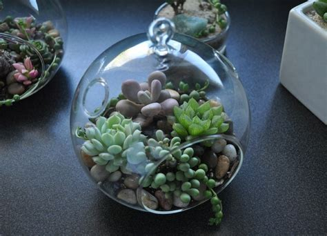 succulents shade succulent terrarium shade through the looking glass a shade loving mysterious hanging