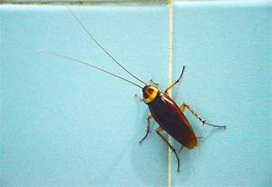 Household Bugs: Get Rid of Bed Bugs and More Greatist