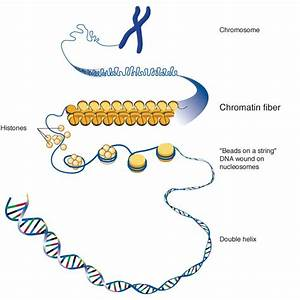 Why Some Genes Are Highly Expressed