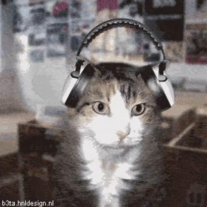 Dj Kitty Animated Gifs Cat Stuff Cats