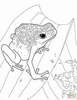 Frog Dart Coloring Poison Pages Drawing Frogs Printable Dot Getdrawings sketch template