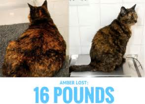 cat losing weight these pets lost weight and so can you this new year