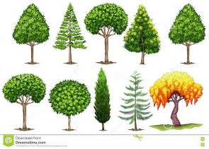 set of different types of trees stock vector image 75637478