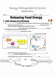 Photosynthesis And Cell Energy Worksheet