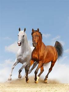 17 Best images about Galloping Horses on Pinterest | White ...