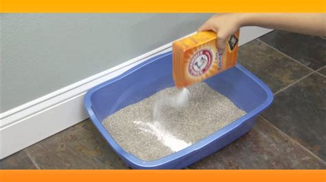 eliminate litter box smell baking soda solutions youtube