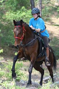 Standardbreds Are A Hardy Breed And Not Difficult To Maintain If Fed Sufficiently  They Can