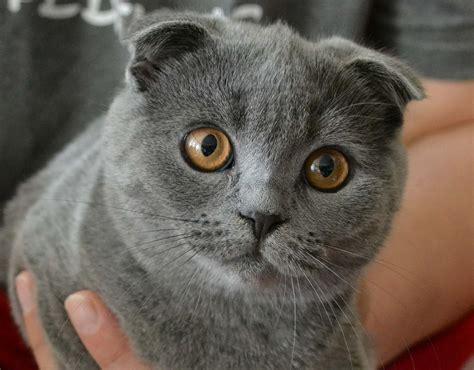 nama kucing yang paling bagus
