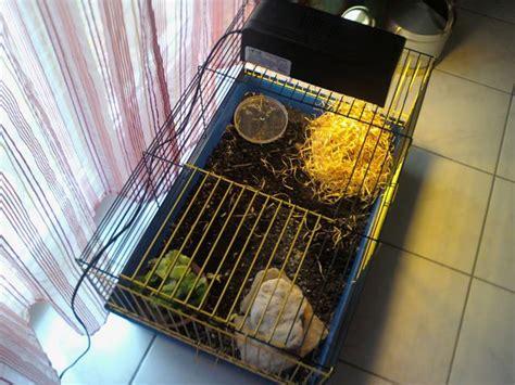 maison dans la cagne condition de vie tortue de terre forum la tortue facile