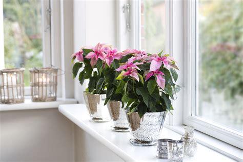 Windows Ill by Floradania Marketing Renewing The Windowsill