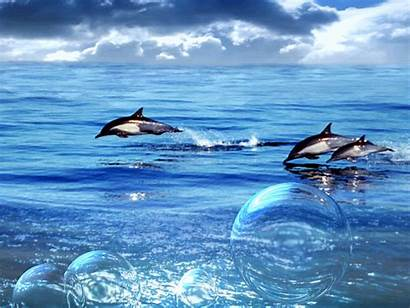 Ocean Water Dolphins Waves Gifs Animation Explicit