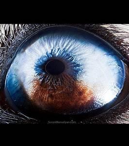 Les Yeux Les Plus Rare : regardez les yeux des animaux de plus pr s ~ Nature-et-papiers.com Idées de Décoration