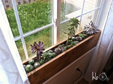 succulent window box  garden   city