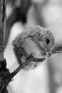 Cute animal pictures and videos - Collection of cute ...
