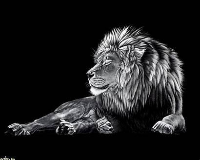 Lion Wallpapers Desktop Backgrounds Lions Cool Wallpapersafari