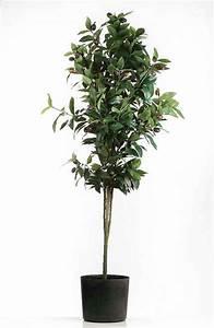 Olivenbaum Im Topf : olive olivenbaum im topf 135 cm f187252 nur eur ~ Michelbontemps.com Haus und Dekorationen
