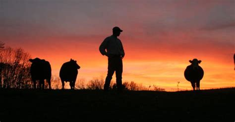 young ranchers listen   tips    timer