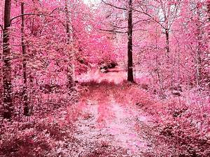 forest of pink pink is the color of love Pinterest