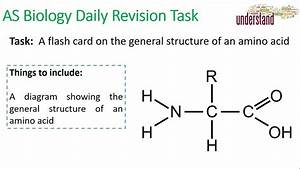 As Biology Daily Revision Task 19  Amino Acid Structure