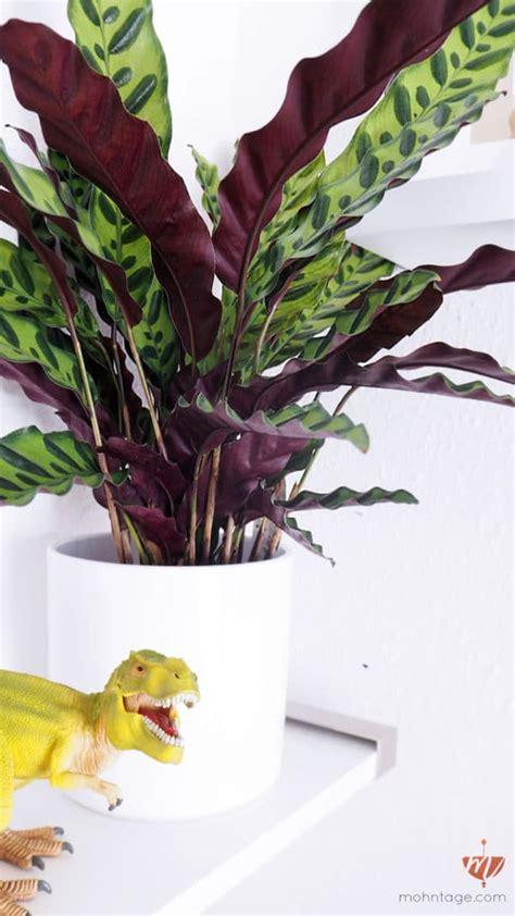 Giftige Zimmerpflanzen Für Katzen by Ungiftige Pflanzen F 252 R Katzen Mehr Jungle F 252 R Die