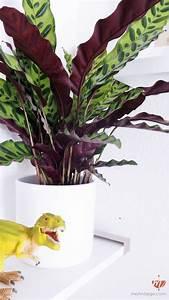 Gemüse Für Katzen : ungiftige pflanzen f r katzen mehr urban jungle f r die ~ Watch28wear.com Haus und Dekorationen