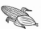 Corn Indian Drawing Coloring Pages Printable Getdrawings sketch template