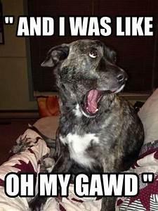 Funny dog captions | Dog #Memes and Fun! | Pinterest ...